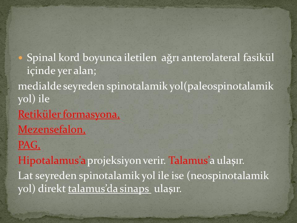 Spinal kord boyunca iletilen ağrı anterolateral fasikül içinde yer alan;