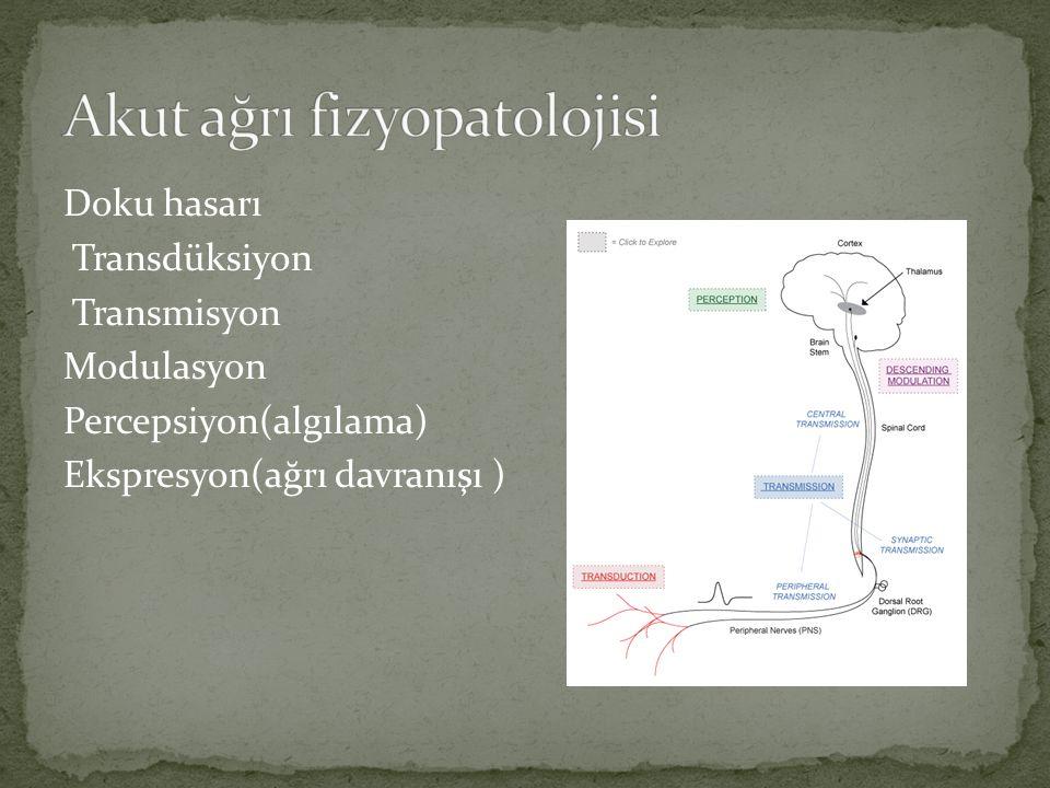Akut ağrı fizyopatolojisi