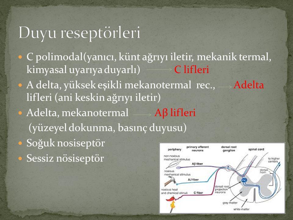 Duyu reseptörleri C polimodal(yanıcı, künt ağrıyı iletir, mekanik termal, kimyasal uyarıya duyarlı) C lifleri.