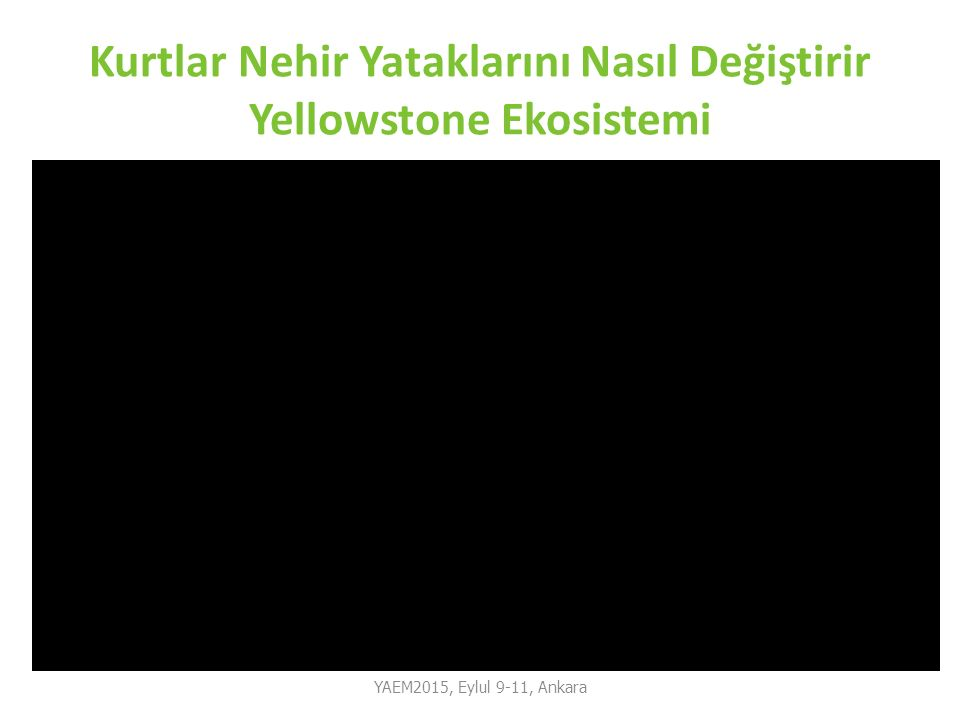 Kurtlar Nehir Yataklarını Nasıl Değiştirir Yellowstone Ekosistemi