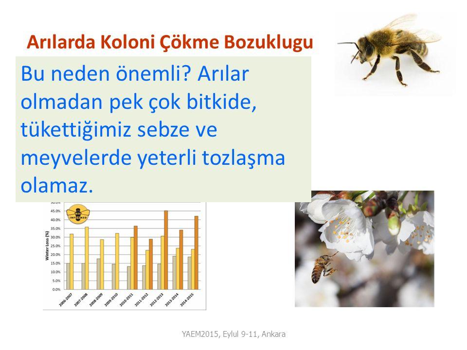 Arılarda Koloni Çökme Bozuklugu