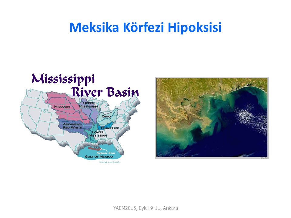 Meksika Körfezi Hipoksisi