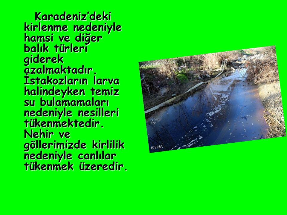 Karadeniz'deki kirlenme nedeniyle hamsi ve diğer balık türleri giderek azalmaktadır.