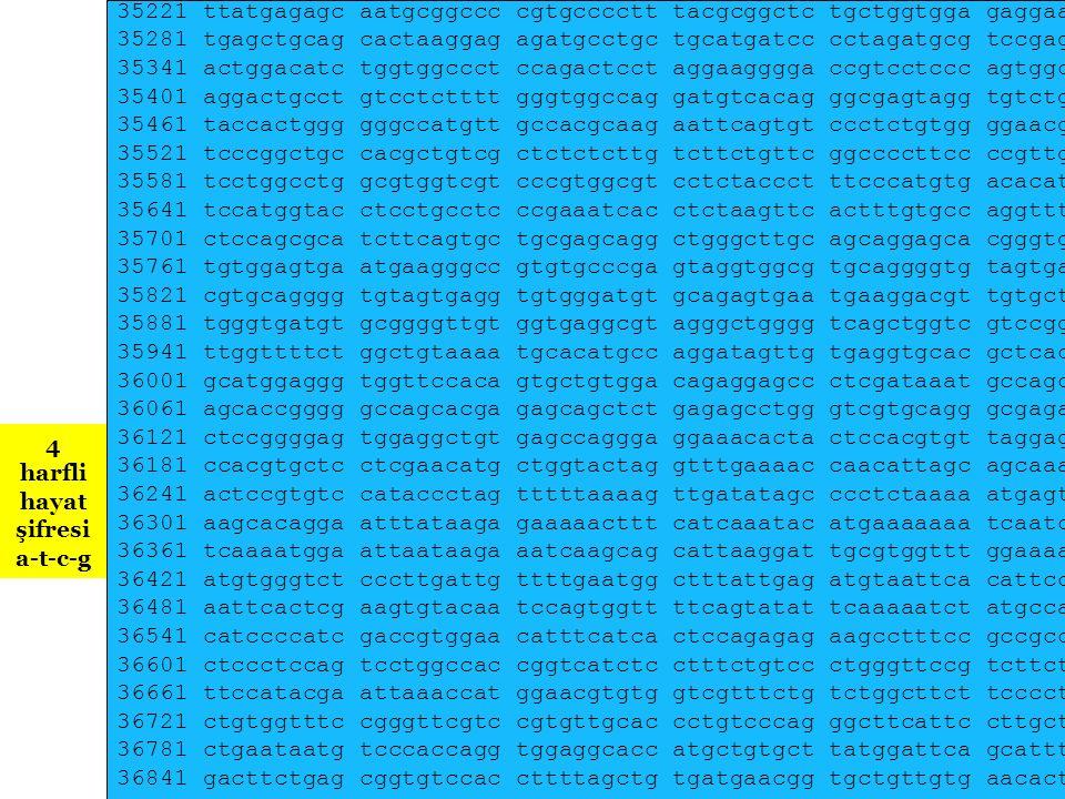 Y Kromozomundan İnsan DNA dizisi