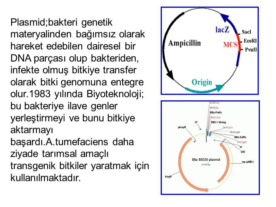 Plasmid;bakteri genetik materyalinden bağımsız olarak hareket edebilen dairesel bir DNA parçası olup bakteriden, infekte olmuş bitkiye transfer olarak bitki genomuna entegre olur.1983 yılında Biyoteknoloji; bu bakteriye ilave genler yerleştirmeyi ve bunu bitkiye aktarmayı başardı.A.tumefaciens daha ziyade tarımsal amaçlı transgenik bitkiler yaratmak için kullanılmaktadır.