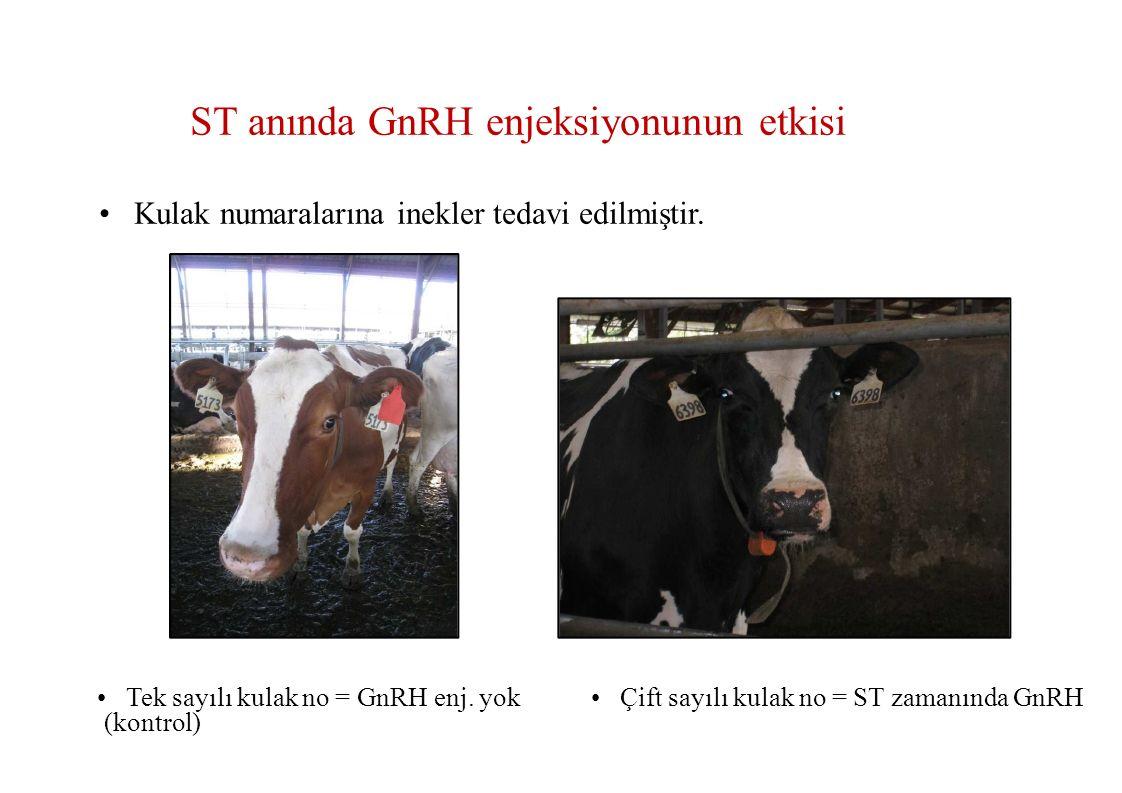 • Kulak numaralarına inekler tedavi edilmiştir.