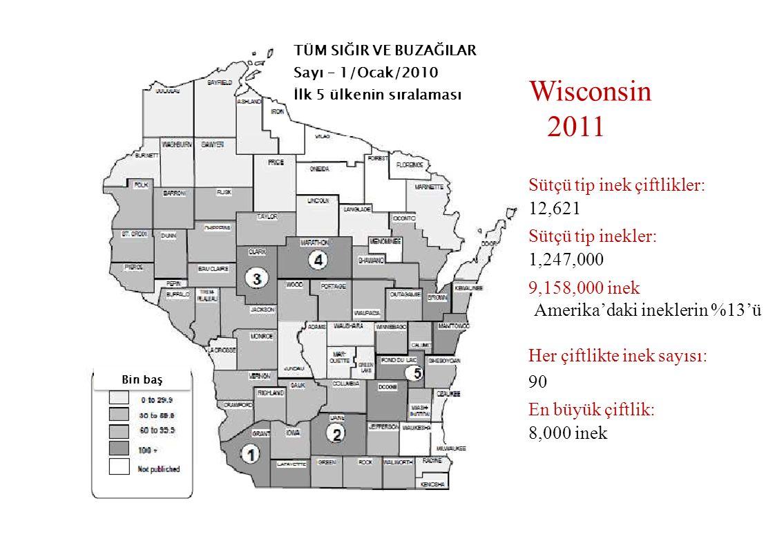 Wisconsin 2011 Sütçü tip inek çiftlikler: 12,621 Sütçü tip inekler: