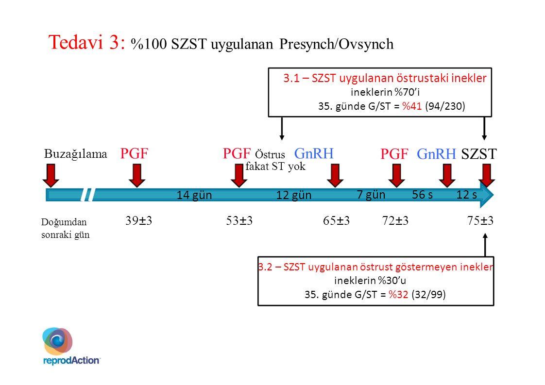 Tedavi 3: %100 SZST uygulanan Presynch/Ovsynch
