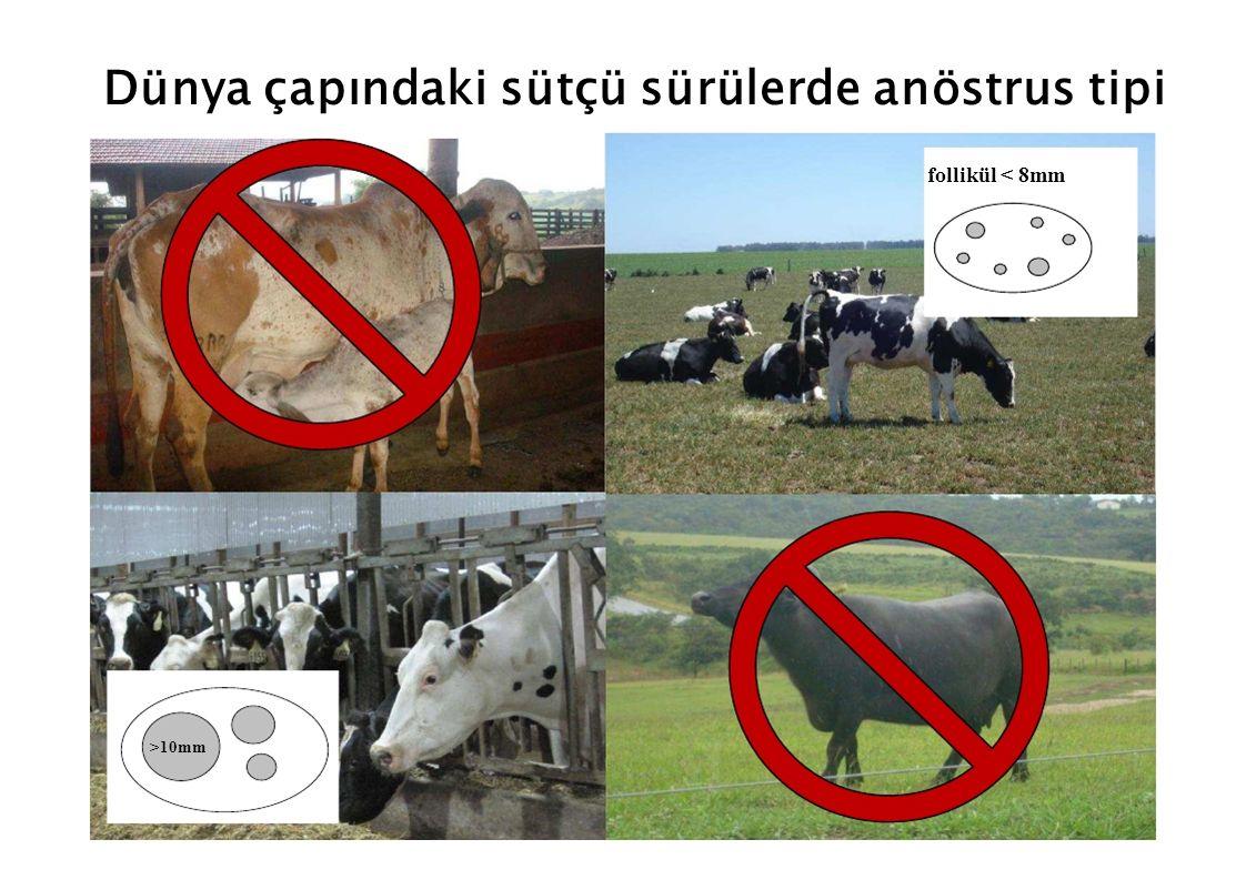 Dünya çapındaki sütçü sürülerde anöstrus tipi