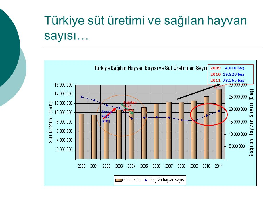 Türkiye süt üretimi ve sağılan hayvan sayısı…