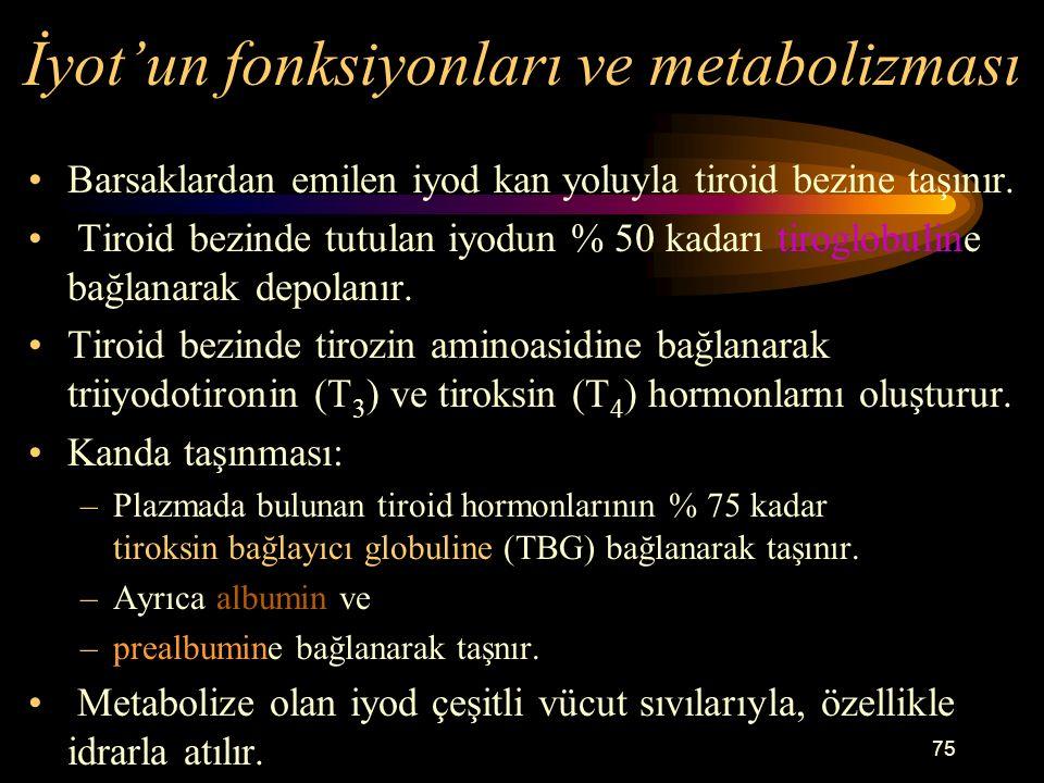 İyot'un fonksiyonları ve metabolizması