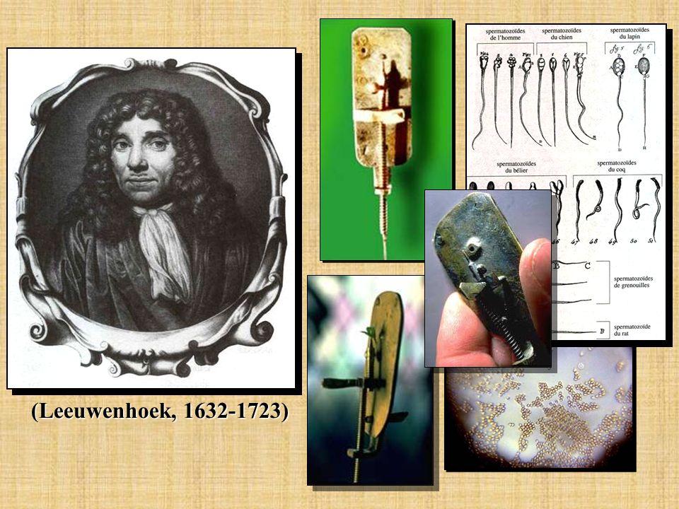 (Leeuwenhoek, 1632-1723)