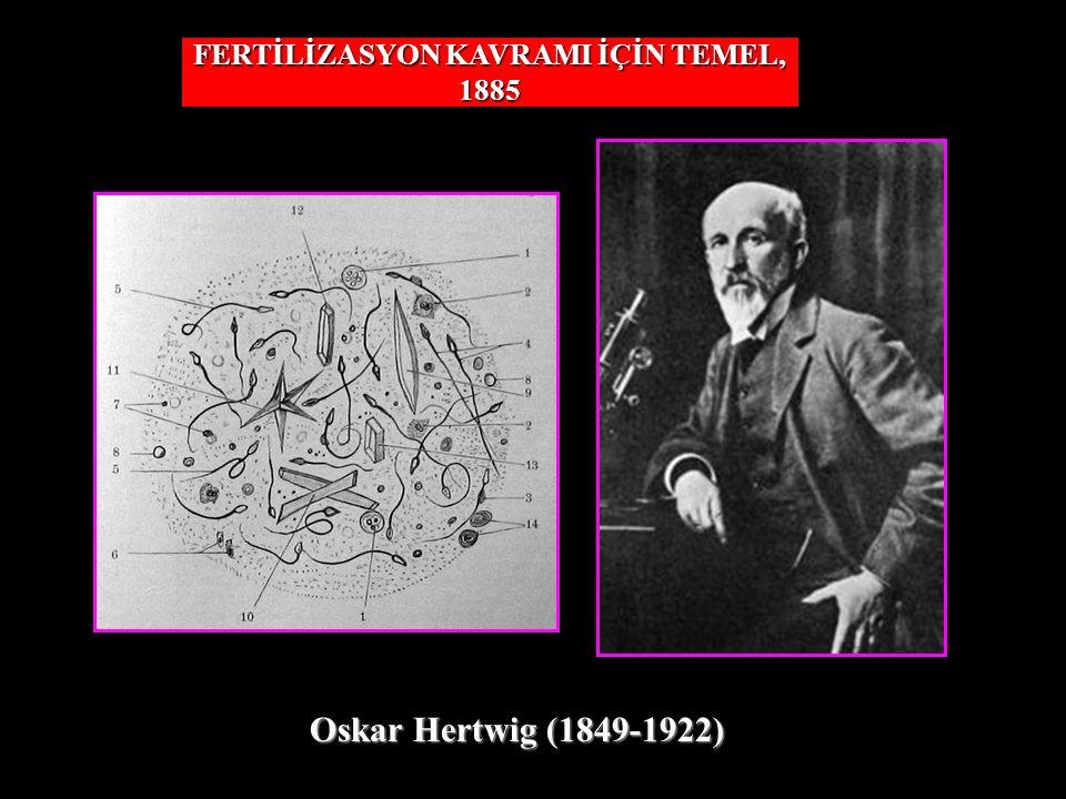FERTİLİZASYON KAVRAMI İÇİN TEMEL, 1885