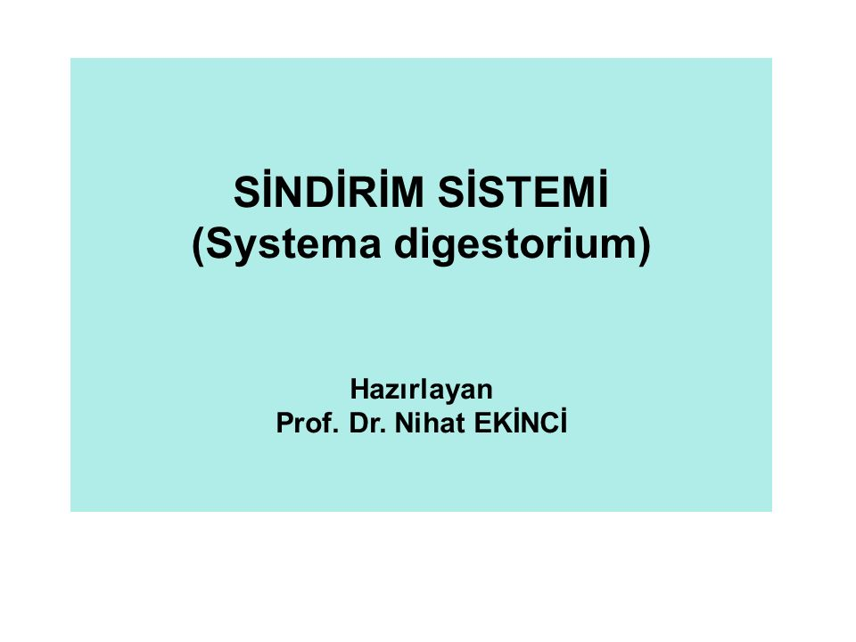 (Systema digestorium)
