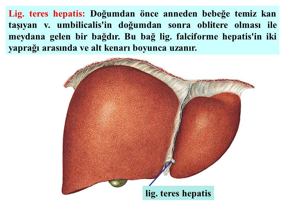 Lig. teres hepatis: Doğumdan önce anneden bebeğe temiz kan taşıyan v