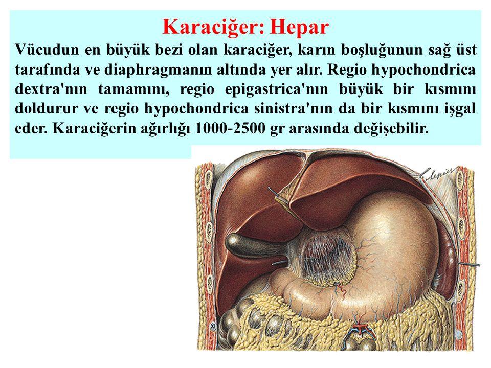 Karaciğer: Hepar