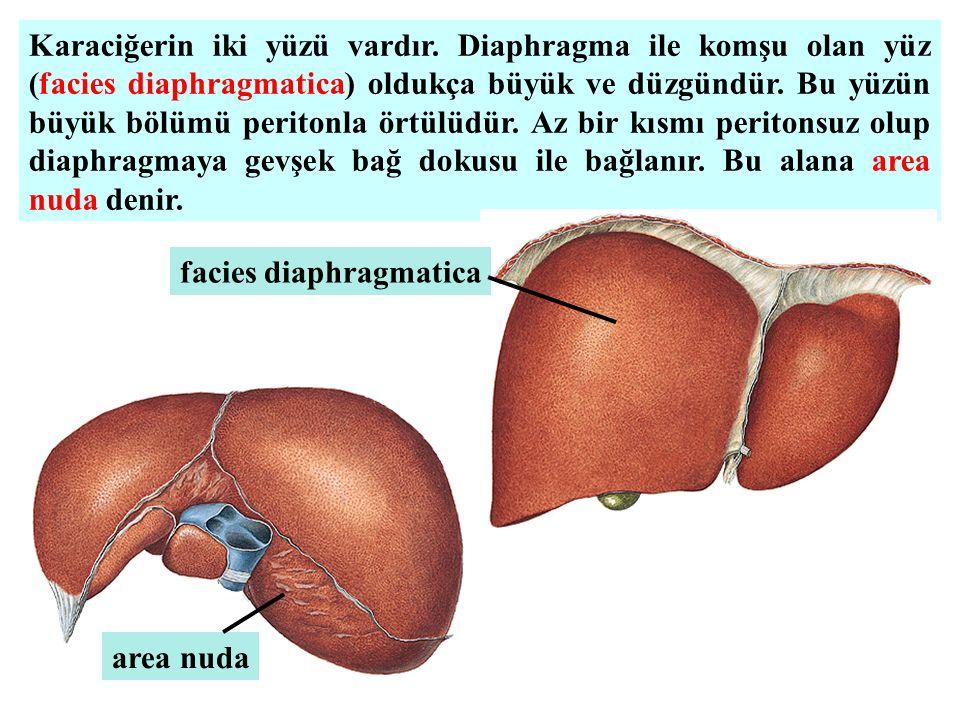 Karaciğerin iki yüzü vardır
