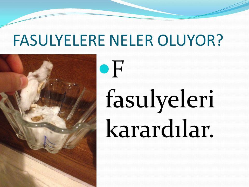 FASULYELERE NELER OLUYOR