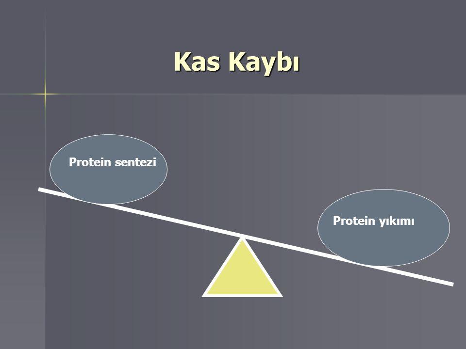 Kas Kaybı Protein sentezi Protein sentezi Protein yıkımı