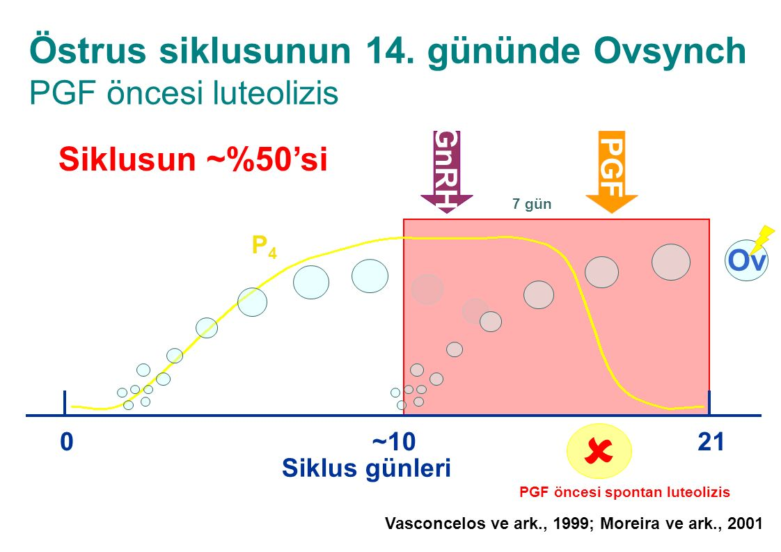 Östrus siklusunun 14. gününde Ovsynch PGF öncesi luteolizis