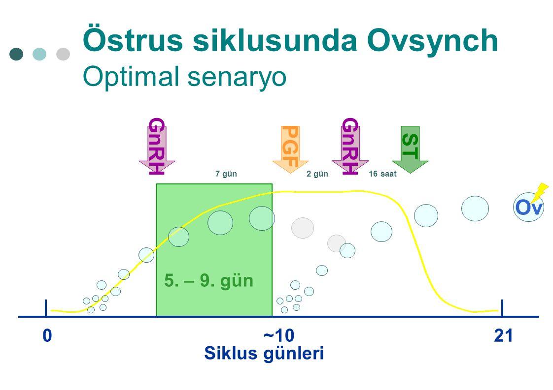Östrus siklusunda Ovsynch Optimal senaryo