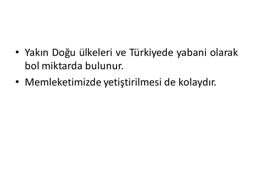 Yakın Doğu ülkeleri ve Türkiyede yabani olarak bol miktarda bulunur.