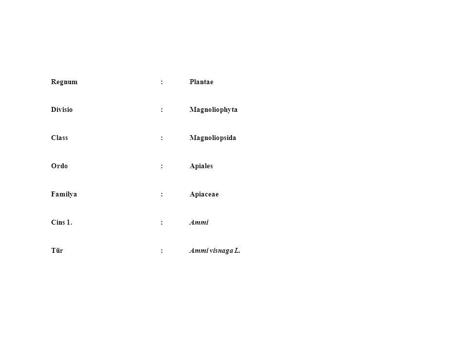 Regnum : Plantae. Divisio. Magnoliophyta. Class. Magnoliopsida. Ordo. Apiales. Familya. Apiaceae.