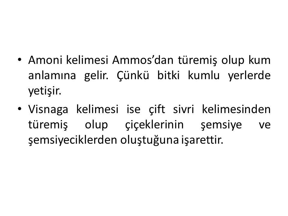 Amoni kelimesi Ammos'dan türemiş olup kum anlamına gelir