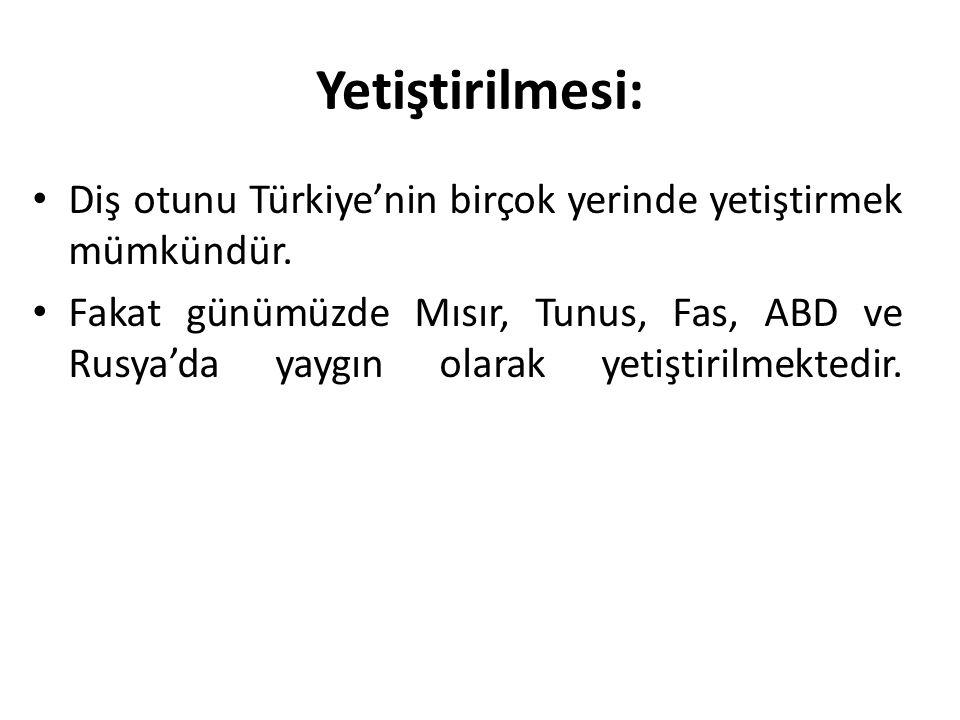 Yetiştirilmesi: Diş otunu Türkiye'nin birçok yerinde yetiştirmek mümkündür.