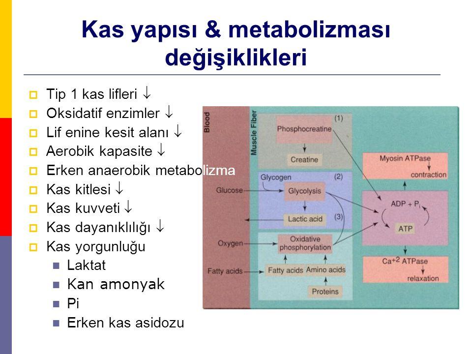 Kas yapısı & metabolizması değişiklikleri