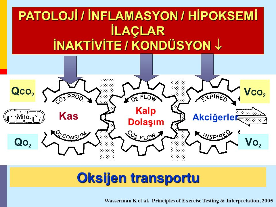 PATOLOJİ / İNFLAMASYON / HİPOKSEMİ İNAKTİVİTE / KONDÜSYON 