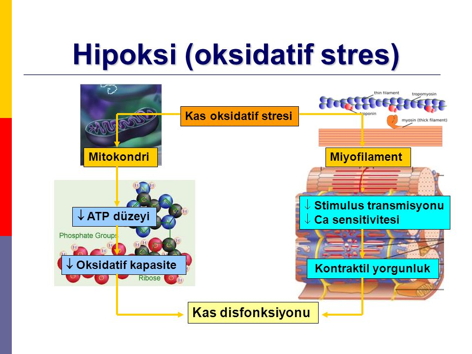 Hipoksi (oksidatif stres)