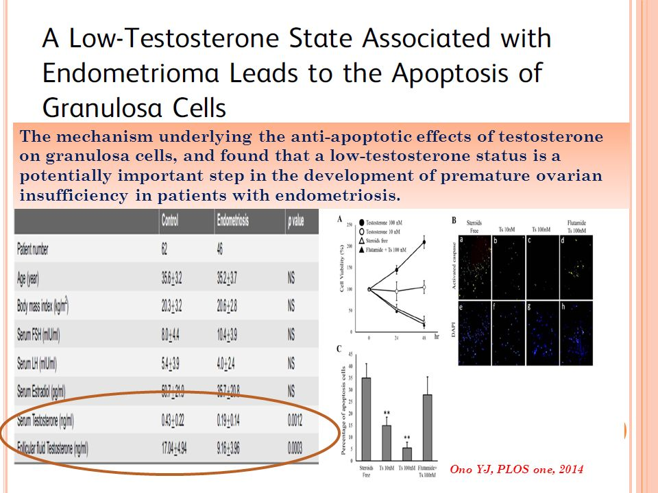The mechanism underlying the anti-apoptotic effects of testosterone on granulosa cells, and found that a low-testosterone status is a potentially important step in the development of premature ovarian insufficiency in patients with endometriosis.