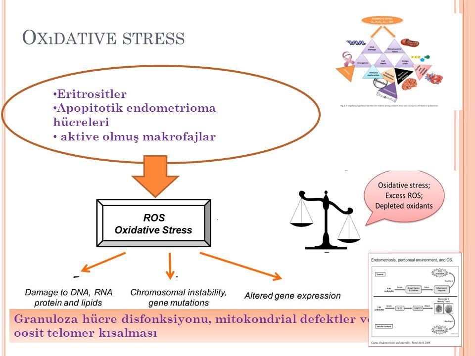 Oxıdative stress Eritrositler Apopitotik endometrioma hücreleri