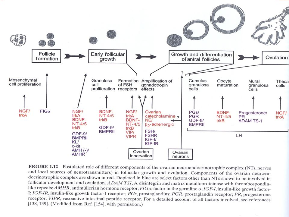 A lower expression of the CYP19A1 in cumulus cells of infertile patients with endometriosis undergoing ovarian stimulation for ICSI compared with infertile women without endometriosis. A lower number of fertilized oocytes in these women. On the basis of these results, the reduced expression of the CYP19A1 gene in cumulus cells might be involved in the impairment of oocyte quality associated with endometriosis, indicating a new perspective for understanding the pathogenesis of endometriosisrelated infertility.