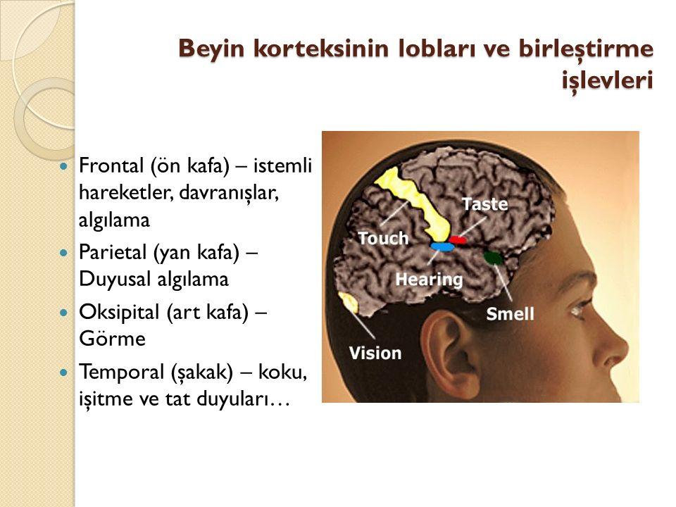 Beyin korteksinin lobları ve birleştirme işlevleri