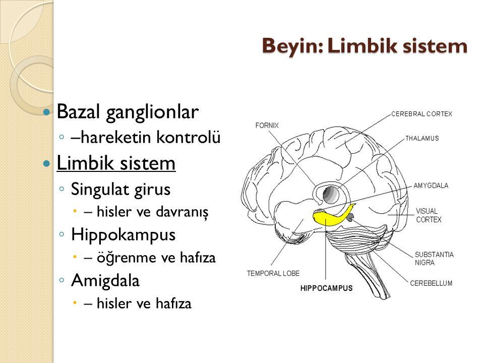 Beyin: Limbik sistem Bazal ganglionlar Limbik sistem