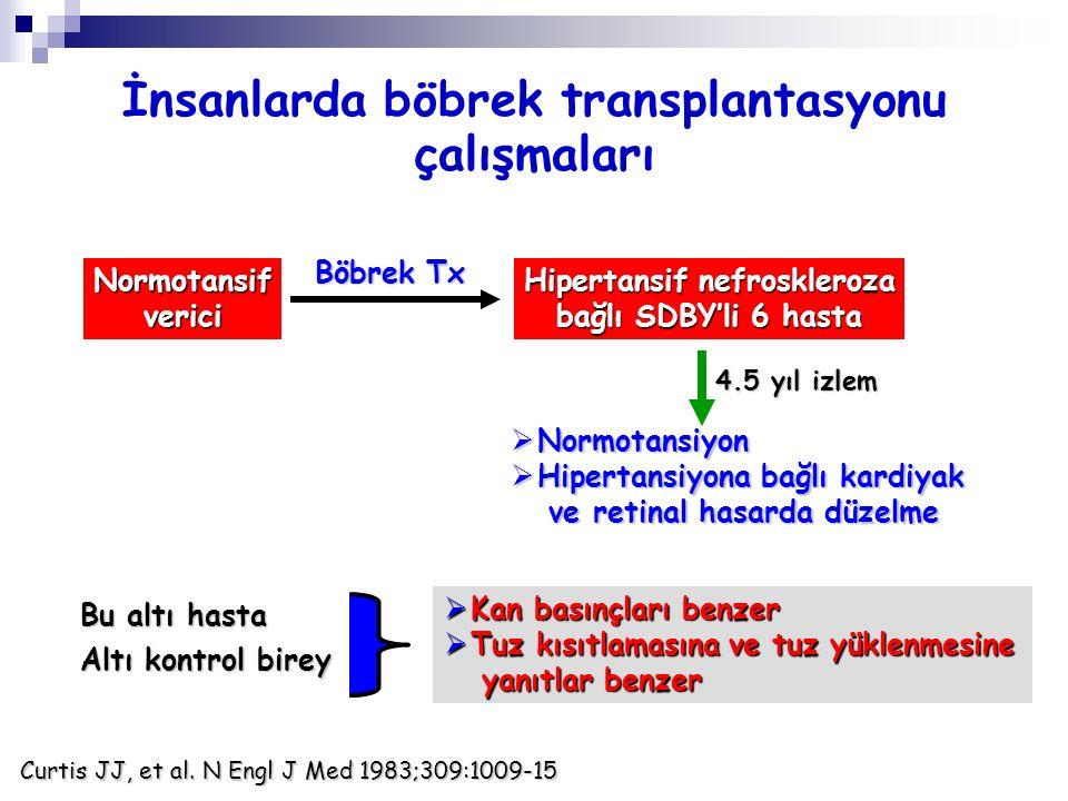 İnsanlarda böbrek transplantasyonu çalışmaları