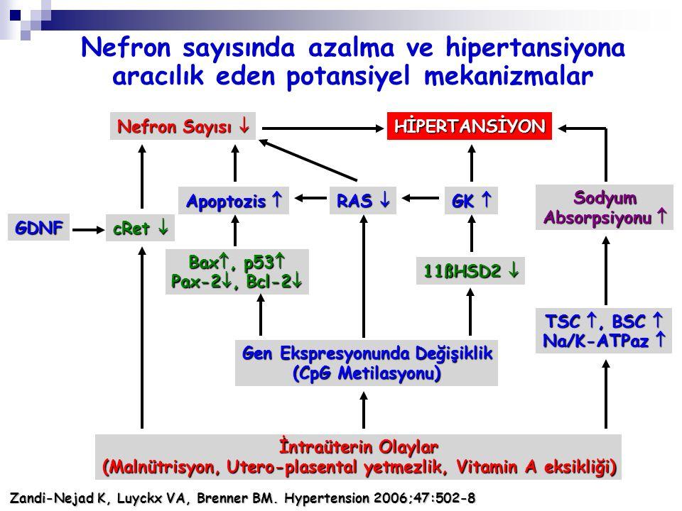 Nefron sayısında azalma ve hipertansiyona aracılık eden potansiyel mekanizmalar