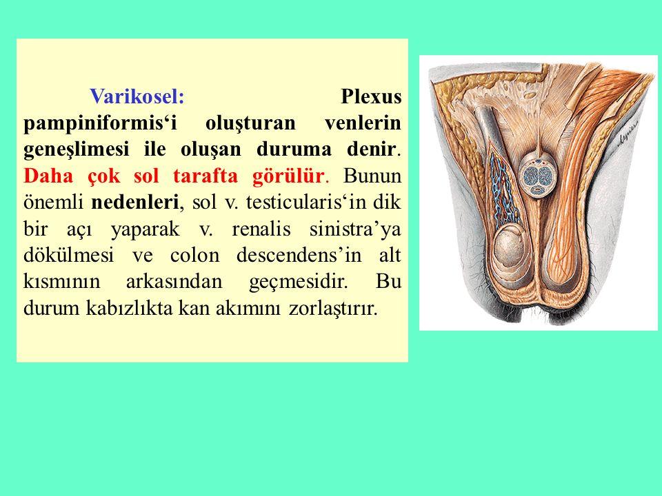 Varikosel: Plexus pampiniformis'i oluşturan venlerin geneşlimesi ile oluşan duruma denir.