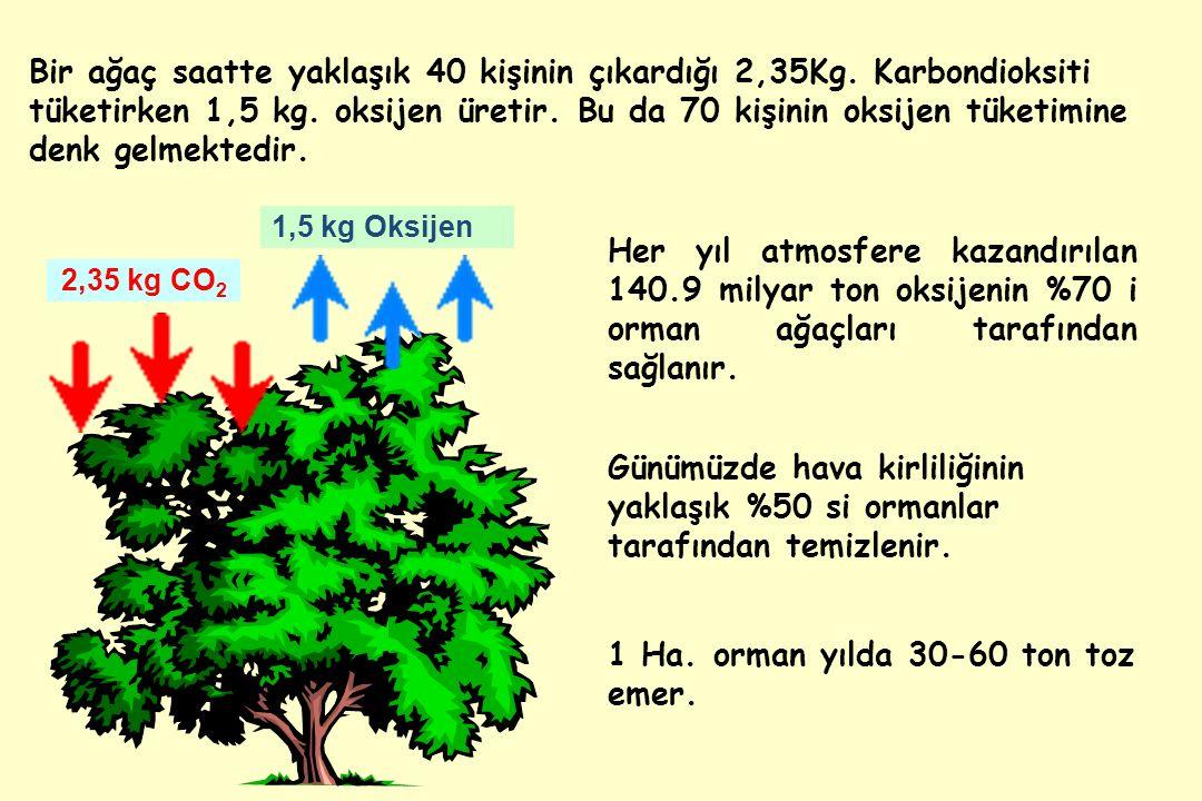 1 Ha. orman yılda 30-60 ton toz emer.