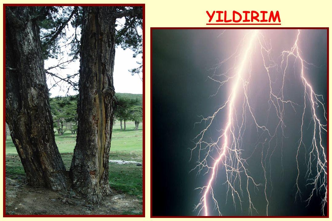 YILDIRIM