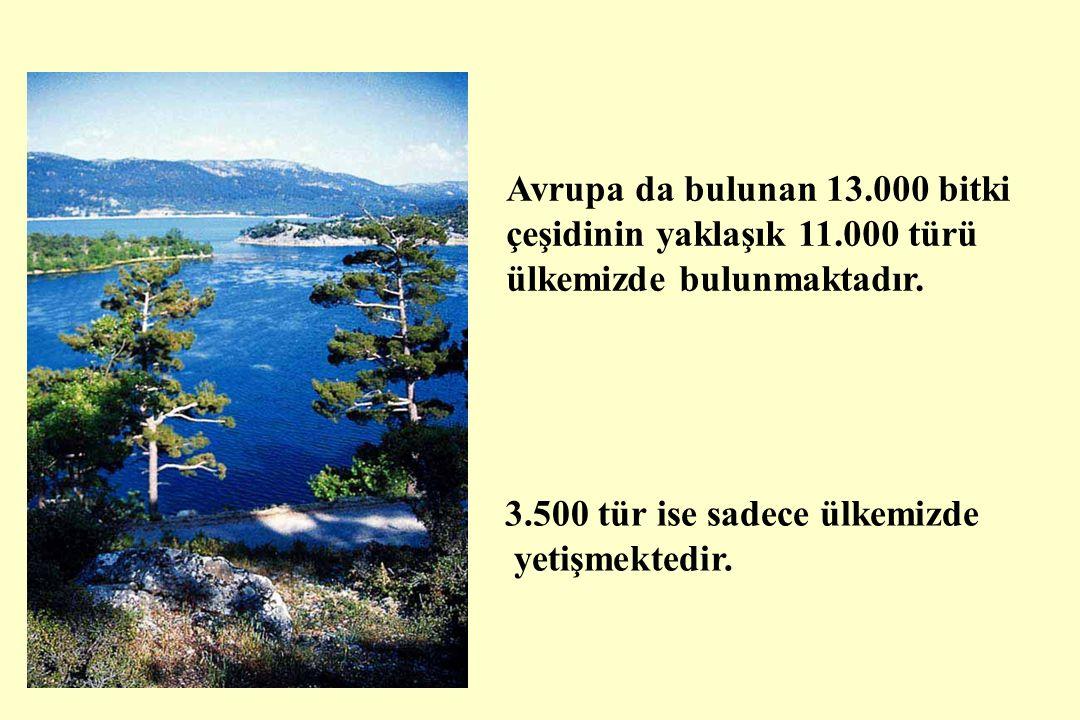 Avrupa da bulunan 13.000 bitki