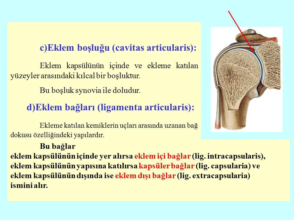 c)Eklem boşluğu (cavitas articularis):