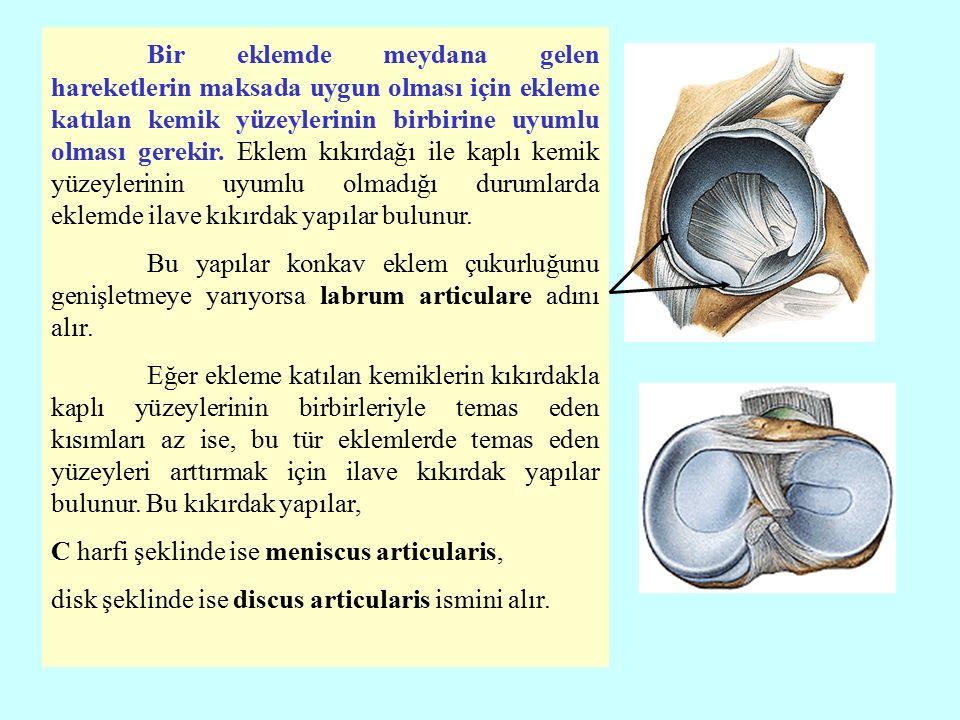 Bir eklemde meydana gelen hareketlerin maksada uygun olması için ekleme katılan kemik yüzeylerinin birbirine uyumlu olması gerekir. Eklem kıkırdağı ile kaplı kemik yüzeylerinin uyumlu olmadığı durumlarda eklemde ilave kıkırdak yapılar bulunur.