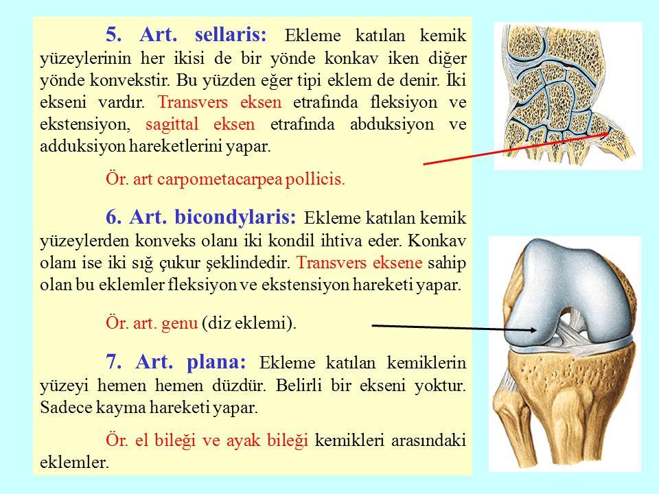 5. Art. sellaris: Ekleme katılan kemik yüzeylerinin her ikisi de bir yönde konkav iken diğer yönde konvekstir. Bu yüzden eğer tipi eklem de denir. İki ekseni vardır. Transvers eksen etrafında fleksiyon ve ekstensiyon, sagittal eksen etrafında abduksiyon ve adduksiyon hareketlerini yapar.