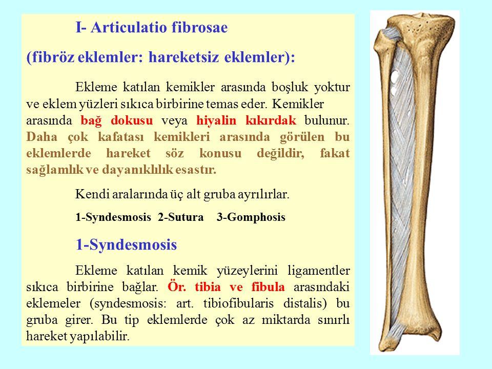 I- Articulatio fibrosae (fibröz eklemler: hareketsiz eklemler):