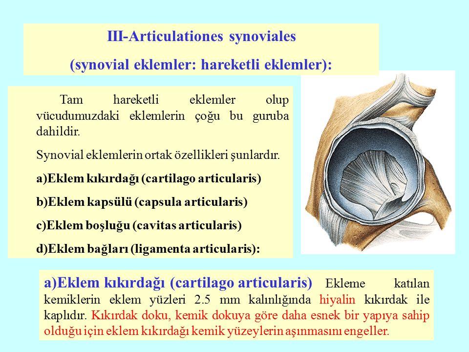 III-Articulationes synoviales (synovial eklemler: hareketli eklemler):