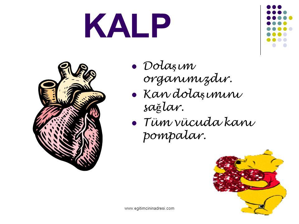 KALP Dolaşım organımızdır. Kan dolaşımını sağlar.