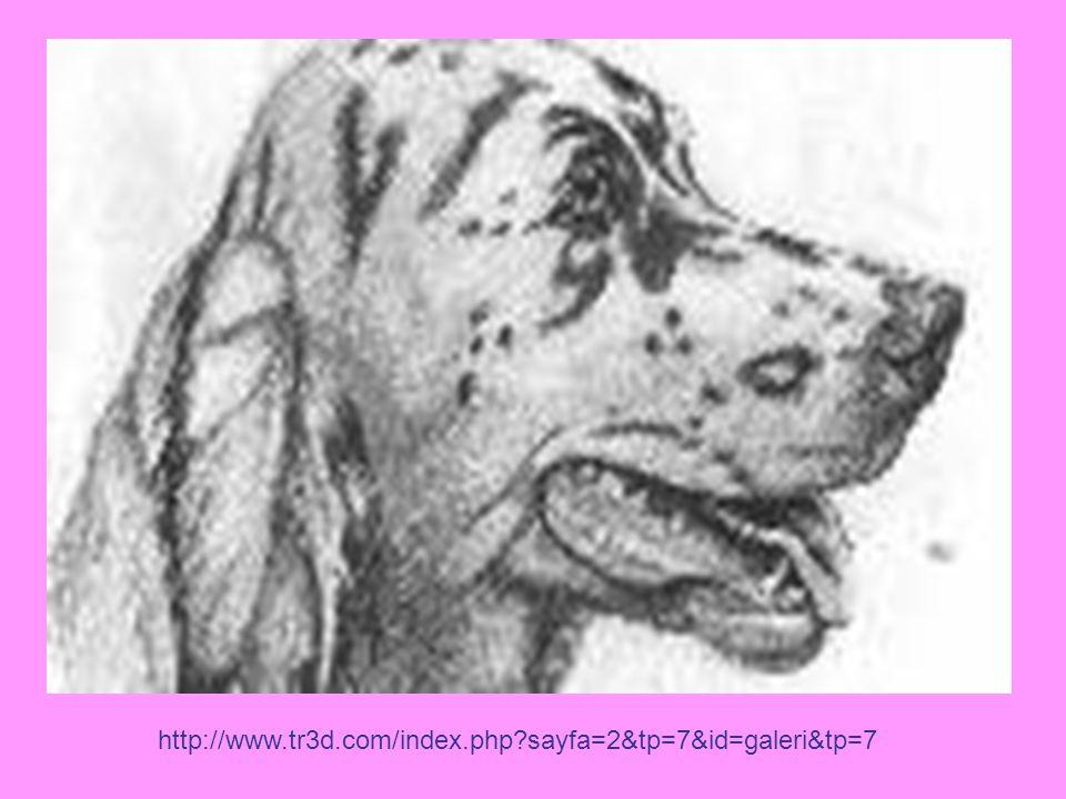 http://www.tr3d.com/index.php sayfa=2&tp=7&id=galeri&tp=7